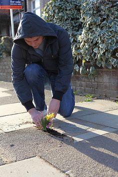 Love the whimsy & generosity of pothole gardens. Steve Wheen creates tiny pothole gardens on the street complete with props for tiny, invisible people. Garden Boxes, Garden Ideas, History Magazine, Queen Birthday, Australian Garden, Garden Show, Street Art Graffiti, Guerrilla, Small World