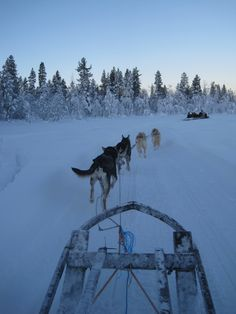 Kiruna in Sweden: The Northern Lights and dogsleding!! Will be there next week, so excited :D