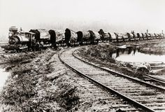 1900 - Train Of Huge Redwood Logs From the Excelsior Redwood Company Of Eureka, Ca.