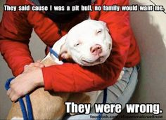 II'm glad to see more & more people are starting to change the name PIT BULL to PITTIES because the term pit bull carries an erroneous stigma. It's time to re-name them, they are NOT bullies, they are sweet unless trained to be aggressive. Did u know they r by nature on top of the list in kindness? & that a tiny Chihuahua ranks high in aggression & needs to be trained to be sweet? I love Chihuahuas, don't get me wrong. Just explaining how mis-informed the world is. Every dog is an image of…