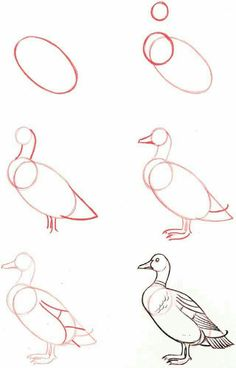Easy Drawings Drawing-Tutorial-for-Occasional-Artists - While there are tons of things out there to draw, it is not simple always. However, these Drawing Tutorial for Occasional Artists will help you out. Pencil Drawing Tutorials, Pencil Art Drawings, Bird Drawings, Easy Drawings, Animal Drawings, Art Tutorials, Drawing Sketches, Sketching, Drawing Lessons