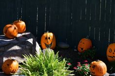 Here's just a few of the jack-o-lanterns you'll find at Dollywood's Great Pumpkin Luminights this month!