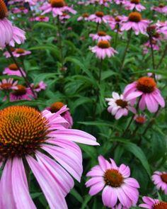 Flowers by Indiana Santana