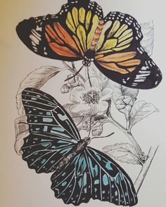 Butterfly painting / drawing