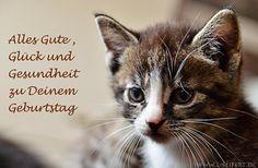 A little kitten. Ein kleines Kätzchen für eine Grusskarte zum Geburtstag