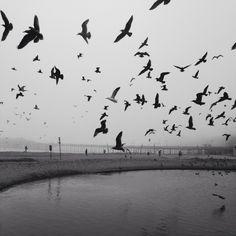 the birds | JL Watkins | VSCO Grid