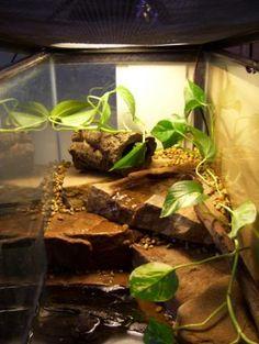 *StepByStep* Fire Bellied Toads 29g waterfall setup - Vivarium Forums