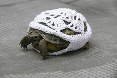 yarn bombing turtle Feelings so mixed. *amazing* yarn bombing, but. it's on the turtle. The TURTLE. Yarn Bombing, Reptiles, Amphibians, Lizards, Mammals, Guerilla Knitting, Turtle Sweaters, Dog Sweaters, Just In Case