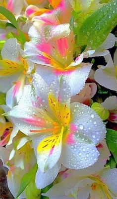 exotic flowers by post uk Beautiful Flowers Wallpapers, Unusual Flowers, Beautiful Flowers Garden, Rare Flowers, Flowers Nature, Amazing Flowers, Beautiful Roses, Pretty Flowers, Flower Images