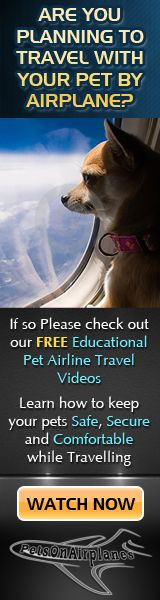 Flying with your pet? Each airline has a different policy on pet travel and some don't allow pets at all. Before you buy a ticket, be sure to read over each of the airline pet policies described here. American Airlines, Flying Dog, Fu Dog, Dog Travel, Pet Safe, Dog Agility, Service Dogs, Dog Care, Mans Best Friend