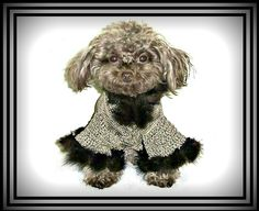 Classic And Elegant Dog Couture Dog Sweaters. Custom Handmade Designer Dog Sweaters and Knitted Sweater-Dresses, Designer Crochet Small Dog Harnesses and Leashes
