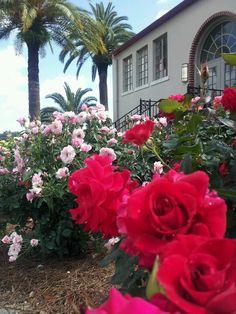 Garden Bistro - Smell the Roses - Lakeland FL