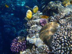 Korallen beim Schnorcheln in Sharm el Sheikh in Ägypten