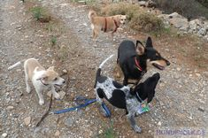 Dogs of the South - The dog types in the Mediterranean countries. From bell dogs to guard dogs, hunting dog breeds, herd dogs to barrel dogs, strays and street dogs. Big Animals, Farm Animals, All Types Of Dogs, Dog Types, List Of Birds, Terrier, Street Dogs, Herding Dogs, Wild Dogs