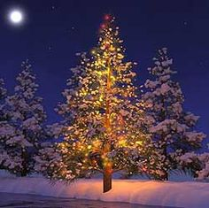 Christmas Tree in Snow by Northup photography ~ love ornaments on ...