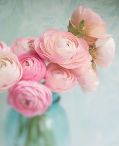 Ranunculus Photography Romantic Pink Flowers