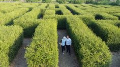 A Maze In South Kalimantan Indonesia