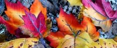 Fall Cover Photos, Fall Facebook Cover Photos, Winter Facebook Covers, Cool Facebook Covers, Facebook Timeline Covers, Fb Covers, Cover Pics, Happy Birthday Wallpaper, Autumn Scenery