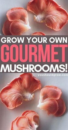 Growing mushrooms is a really cool way to get started with indoor gardening. These mushroom growing kits give you everything you need to grow your own delicious mushrooms right on your kitchen counter. Organic Vegetables, Growing Vegetables, Growing Tomatoes, Organic Gardening Tips, Indoor Gardening, Vegetable Gardening, Veggie Gardens, Organic Farming, Edible Mushrooms