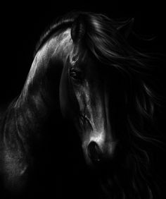 BLACK ~`~ Is the new black~`~ Black Horse
