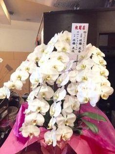 プレジデントバンクに掲載している有限会社花みちカンパニーさんに胡蝶蘭をお願いしたら立派な素敵な胡蝶蘭を届けて頂きました( ω )  凄く喜んで頂き私も嬉しいです  12月3日にオープンするお店のスタンドも早速お願いしました  お花を頼む際はオススメですよ  #お祝い #花束 #アレンジ #胡蝶蘭 #花みちカンパニー #プレジデントバンク tags[福岡県]