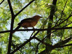 Anú --{ Birds }--