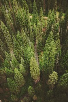 freckled69: Follow me Nature Vintage Photography Blog!