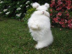angora bunny! Makes some soft and fluffy yarn.