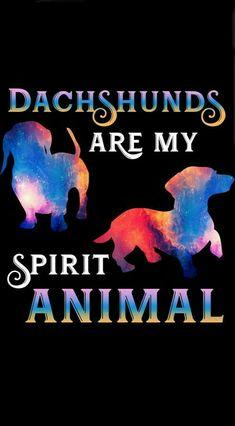 Dachshund Dachshunds are my Spirit Animal Dachshund Breed, Dachshund Art, Long Haired Dachshund, Daschund, Dachshund Quotes, Dachshund Gifts, Dog Quotes, I Love Dogs, Puppy Love