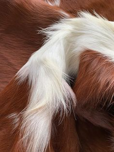 Search results for: '1437' Cowhide Furniture, Cow Hide Rug, Search, Searching