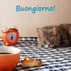 Questo gatto non sembra sentire la sveglia...! Buona colazione ;)