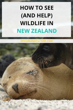 Things to do in New Zealand   Wildlife Tours in New Zealand   Adventures in New Zealand