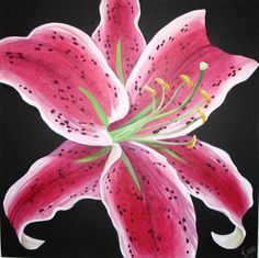 Stargazer Lily - Acrylic on Box Canvas