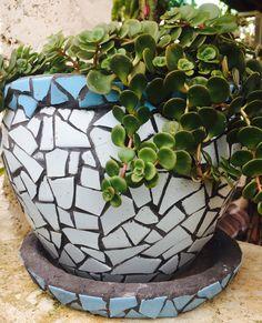 Mosaico Cactus y Suculenta