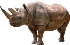 Sticker Rhinoceros 130x83cm Stickasticker https://www.amazon.fr/dp/B004KLPX34/ref=cm_sw_r_pi_dp_A9KAxbDEZQ0PR