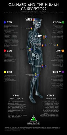 Cannabis and the Human CB receptors  (The endocannabinoid system)  This chart shows the medicinal and therapeutic effects of cannabis. As humans we are naturally  to use cannabis as our healing plant.