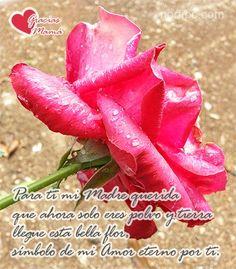 Para ti mi Madre querida que ahora solo eres polvo y tierra llegue esta bella flor, símbolo de mi amor eterno por ti