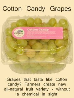 Grapes that taste like cotton candy? Farmers create new all-natural fruit variety - without a chemical in sight #grapes #yummy