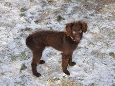 Bosnisk blanding, hundBosnisk blanding, hund, 7 mdr.  Smukke Anuk mangler sit helt eget hjem. Denne helt igennem fantastiske hund. Sød, kærlig, legesyg, god til børn, kan med katte, lidt forsigtig, kælen og fuldstændig charmerendepige søger en familie der vil elske hende til hendes dages ende. Er det dig/jer??? Hun er chippet, vac., har pas, loppe og orme behandlet. Klar til at flytte.
