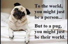 Pugs are my world.