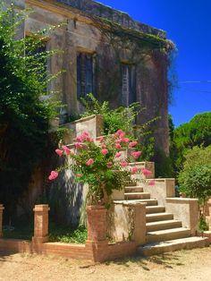 Vineyard at Katakolon, Greece Katakolon Greece, Greece Cruise, Greece Travel, Places In Greece, Corfu, Caribbean Cruise, World Cultures, Dark Fantasy, Homeland