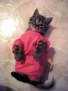 Mimi  #cat #kitten #kitty #tabby