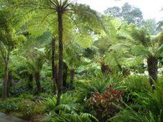 Atavistic landscape--the fern grotto at Lotusland in CA