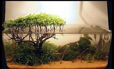 Like a mangrove forest in miniature Aquarium Terrarium, Aquarium Rocks, Mini Terrarium, Marine Aquarium, Aquarium Fish, Betta Tank, Fish Tank, Vivarium, Biotope Aquarium
