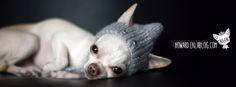 Un hiver tout doux... selection shopping howard le chichi blog chien