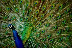 zoo/zoo_scho_1505/slide_32
