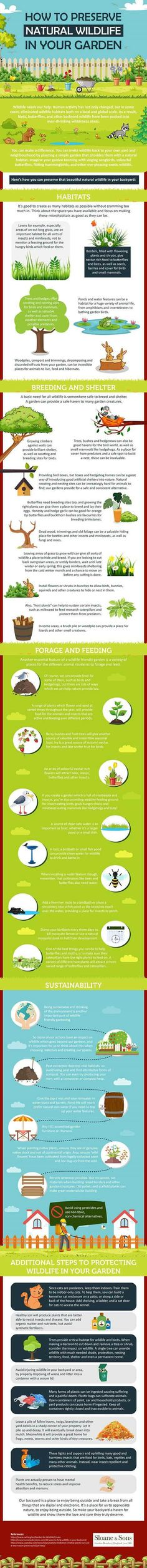 This infographic explains simple tips and tricks that you can implement in your garden to preserve wildlife habitats. Food Dog, Pet Food Storage, Dog Pads, Small Insects, Unusual Animals, Pet Furniture, Cool Pets, Diy Stuffed Animals, Pet Accessories