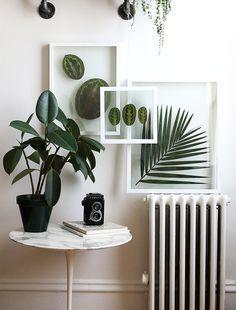 plant frame - Buscar con Google