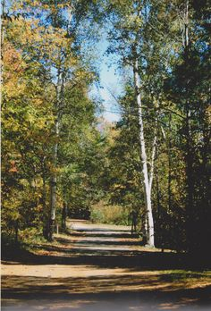 Grundy Lake Provincial Park-Poplar Campground Ontario Provincial Parks, Road Trip Usa, Roads, Photo Credit, Paths, Trail, Cheesecake, Places To Visit, Sidewalk