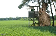 'Animal Proportions - Open photoshop contest is now closed. The contest received 31 submissions from 24 creatives. Photoshop Tips, Photoshop Design, Photoshopped Animals, Rabbit Hunting, Hunting Humor, Police Dogs, Color Balance, Photo Contest, Photo Manipulation